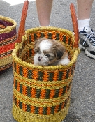 Grass Basket Pet Carrier